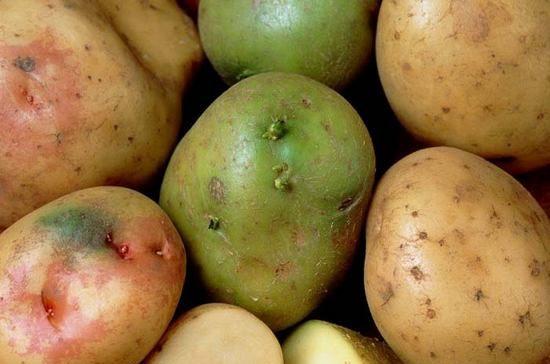 Картофель: польза и вред для организма