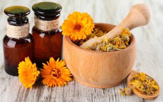 Календула: польза и вред для здоровья, советы