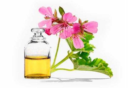 Герань: лечебные свойства и противопоказания, советы