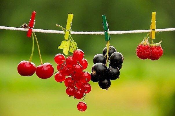 Фруктовый гороскоп: узнай, что ты за фрукт
