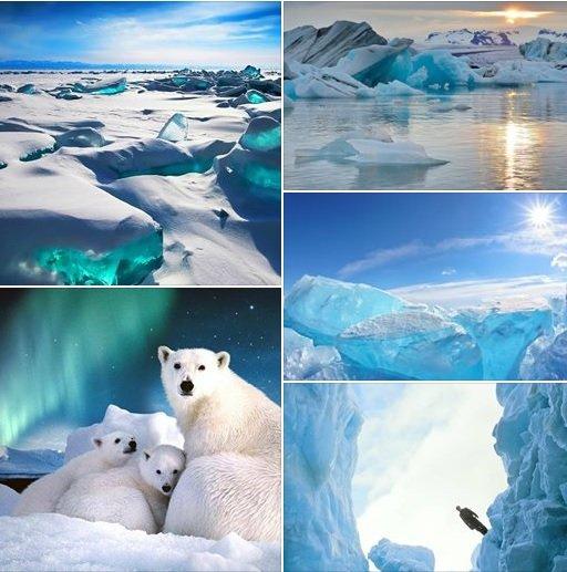 Рассказ про Арктику: реальная история из жизни