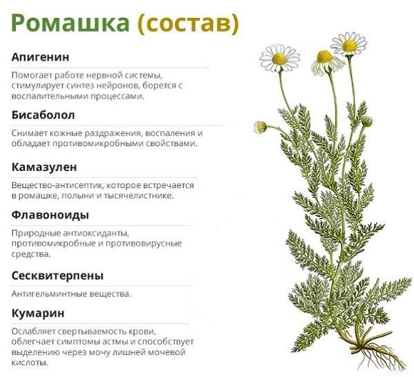 Чем полезен чай из ромашки: лечебные свойства, применение