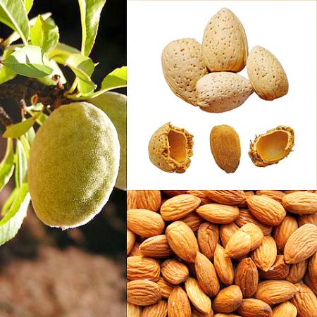 Миндаль плоды