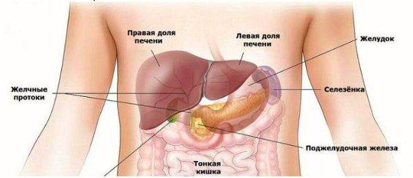 селезенка в организме