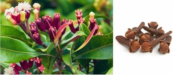 растение гвоздика