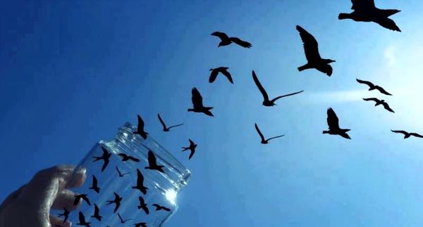 прощение: птицы летят на волю