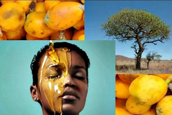 Марула: плоды и масло