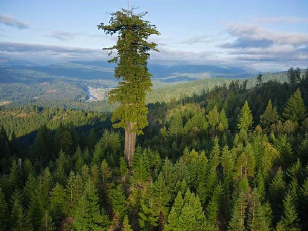 Дерево и человек. Дерево и человек или все люди похожи на деревья